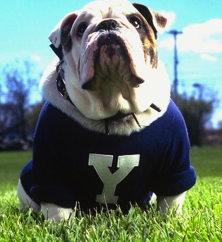 11 yale mascot handsome dan