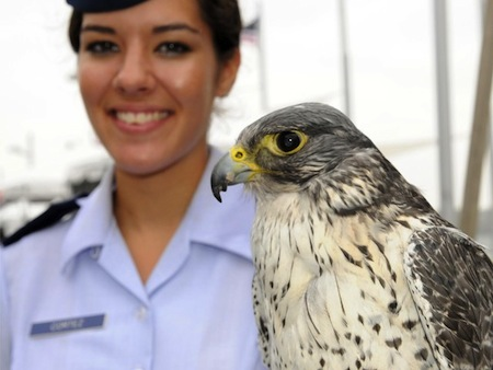 14 destiny the air force falcon mascot