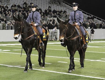 15 army mule mascots stryker ranger iii