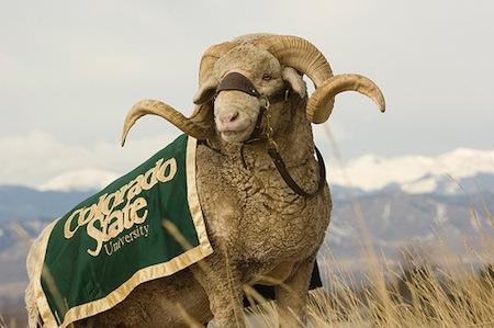 18-cam-the-ram-colorado-state-mascot
