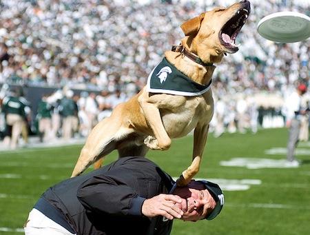 22-michigan-state-msu-mascot-zeke-iii-zeke-the-wonder-dog