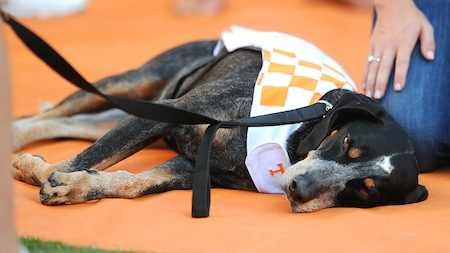 23 tennessee mascot smokey ix napping
