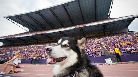 24 washington huskies mascot dubs