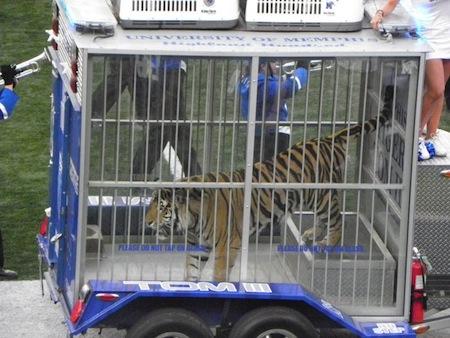 3 memphis mascot tom the tiger