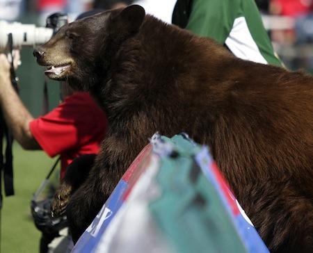4 baylor bears mascot lady the bear