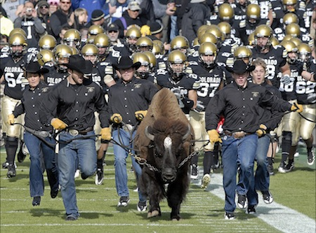 5 colorado mascot ralphie the buffalo