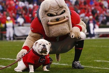 9 georgia bulldogs uga viii