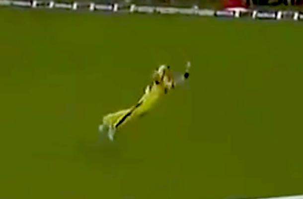 amazing cricket catch