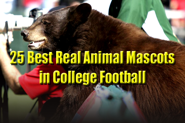 best real animal mascots college football
