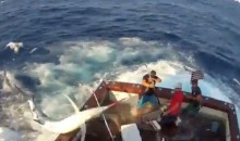 Watch A 600-Pound Black Marlin Jump Into A Boat (Video)