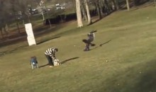 Eagle Tries to Snatch Kid from Montreal Park (Video)