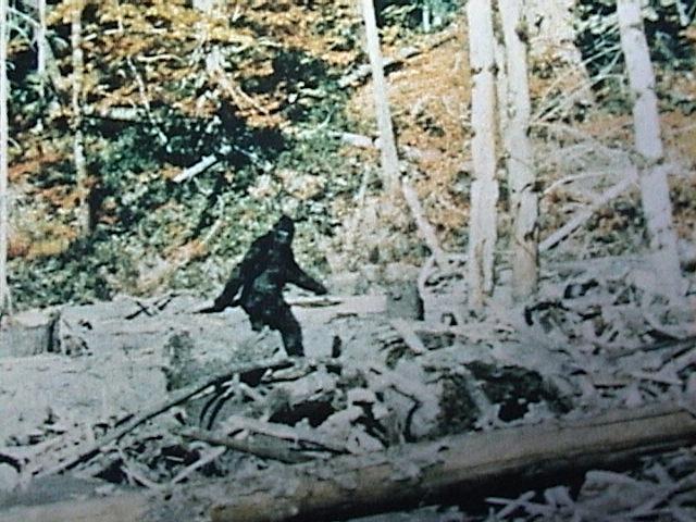 4 bigfoot - manti te'o theories