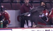 Condor Gets Loose on the Ice During ECHL Game (Video)