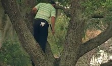 Sergio Garcia Shot a Ball Into a Tree, So He Climbed the Tree and Hit the Ball Out (Video)