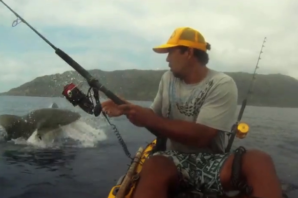 shark attacks tuna near kayak