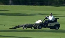 Three-Legged Gator Interrupts Play During Zurich Classic at TPC Louisiana (Videos)