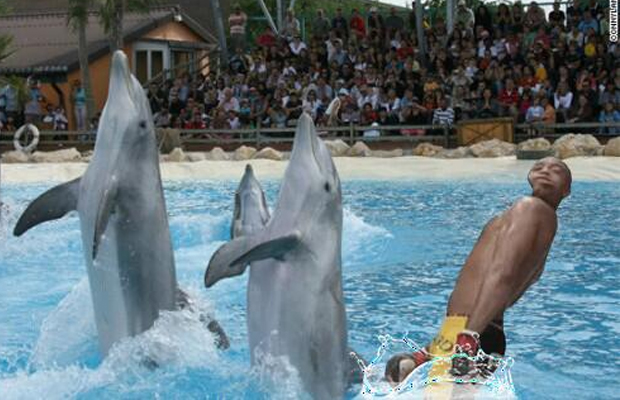 10 anderson silva swimming with dolphins - anderson silva knockout memes
