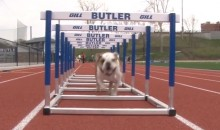 The Butler Bulldog Is Training Hard for the Big East (Video)