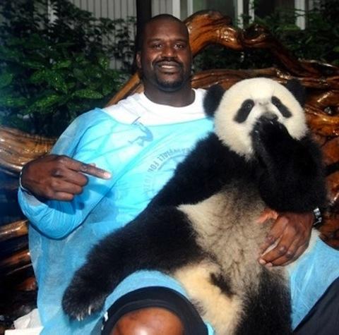 Shaq holding a panda