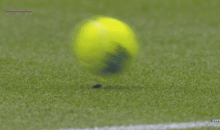 Watch This Amazing Super Slow-Mo Replay of a Bug's Near Death Experience at Wimbledon (GIF)