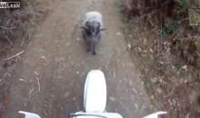 Dirtbiker vs. Angry Ram: Who Ya Got?