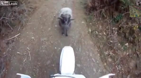 dirtbiker vs ram