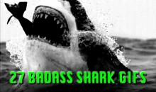 27 Badass Shark GIFs