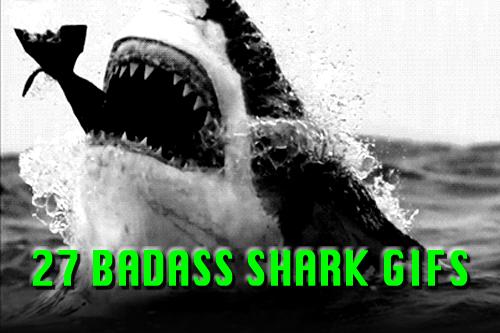 shark gifs
