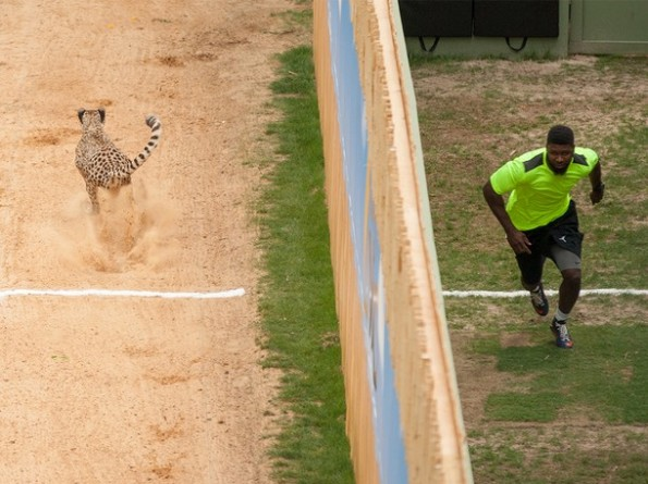 NFL Players Race Cheetah