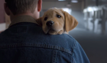 You Cannot Resist This Budweiser Super Bowl Commercial Featuring Clydesdales and Adorable Puppy Dogs (Video)