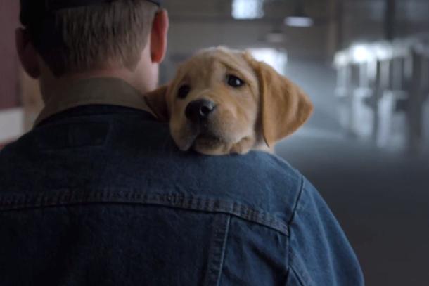 budweiser super bowl puppy commercial