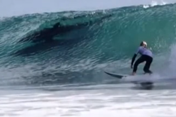 dolphins interrupt surfing competition