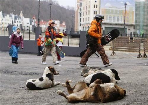 6 sochi stray dogs - things we won't miss about sochi 2014 winter olympics