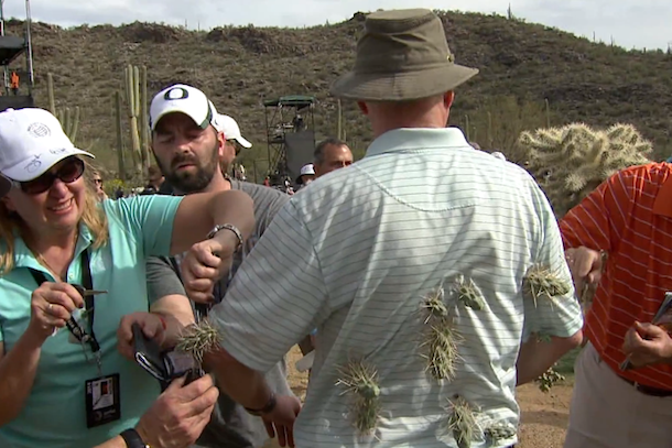 golf fan attacked by cactus
