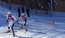 Some Stray Dogs Got onto the Cross-Country Course in Sochi and Barked at Some Skiers (Video)