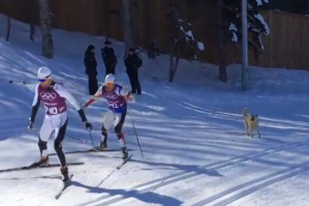 stray dog barking at cross-country skiers
