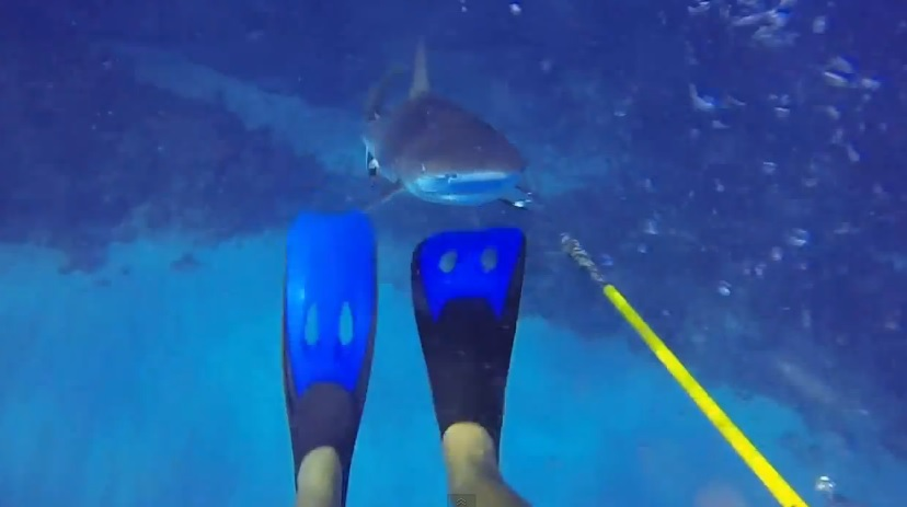 shark attack gopro cam