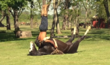 Horse Yoga Is Real (GIF + Video)