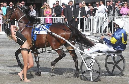 blonde flasher nz trotting cup chariot race - sports flashers
