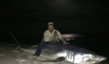 Florida Fisherman Lands Record 805-Pound Mako Shark on the Shores of the Gulf of Mexico (Video)