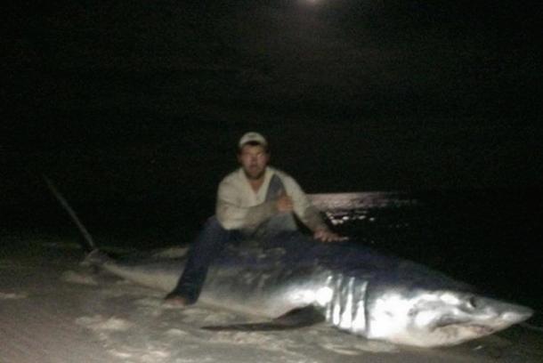 joe polk record mako shark