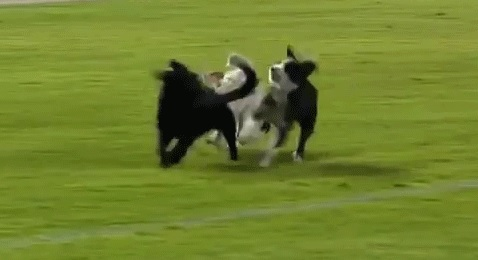 Dogs on Soccer Field