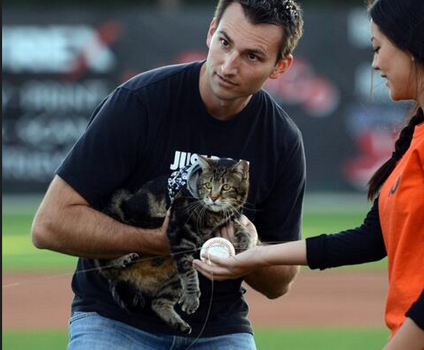 Hero Cat First Pitch