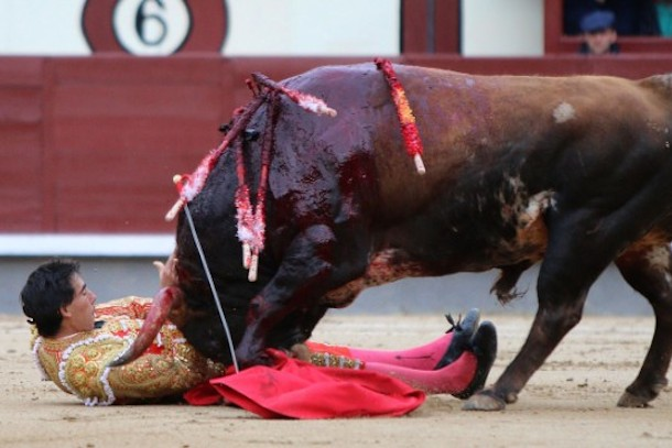 bull fight cancelled after bulls gore matadors