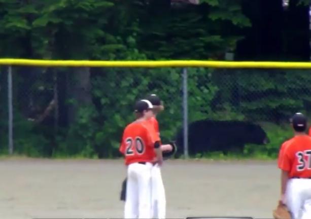 Bear on the baseball field