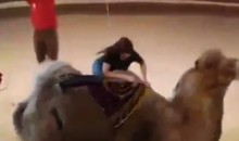 Hilarious Scene Unfolds as Woman Gets Thrown Off a Circus Camel (Video)