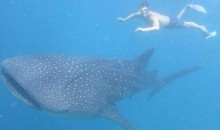 Evgeni Malkin's Summer Vacay Is Better than Yours…Unless You're Also Going Swimming with a Whale Shark (Pic)