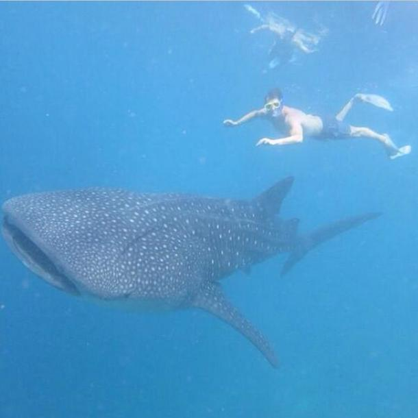 malkin swimming with whale shark