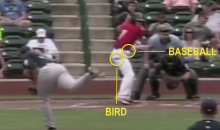 Move Over, Big Unit: Minor League Pitcher Kills Bird with Pitch (Video)