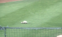 It's Not a Real Minor League Baseball Game Without a Possum Delay (Video)